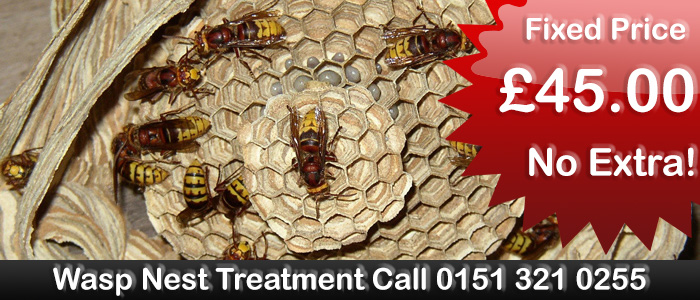 Liverpool Pest Control Wasp nest treatment or removal, fixed price £29.50 covering Liverpool and Merseyside. Contact us on  0151 321 0255  for more info