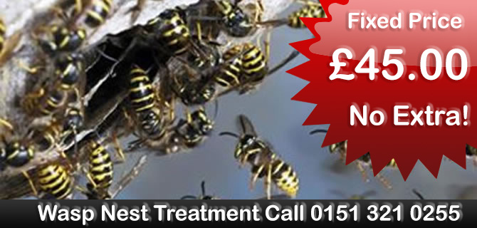 Wasp Control Liverpool wasps nest treatment, removal fixed price £29.50 no extras, same day, 24 hour, 7 days a week
