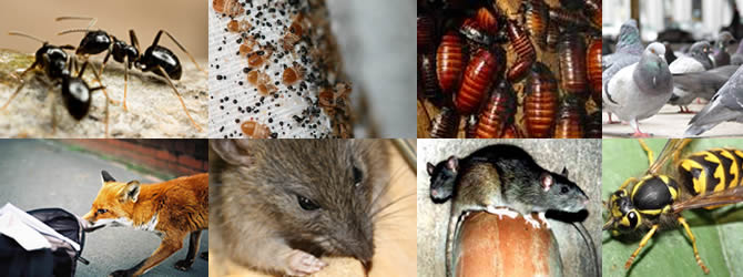 Crossens Pest Control Service: professional pest control for Liverpool & Merseyside, please contact us for more info.