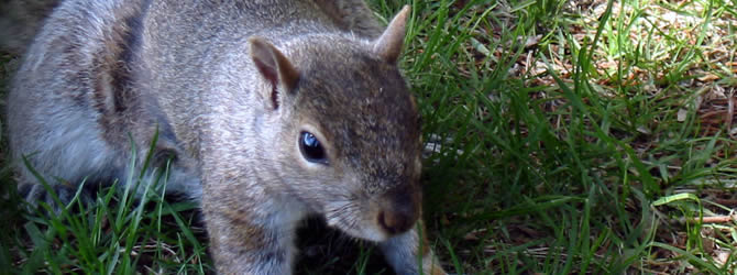 Crossens Pest Control Service: professional pest control service for Squirrels Liverpool & Merseyside, please contact us for more info.